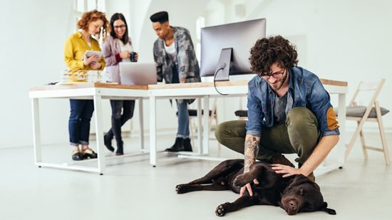 People working in an office setting with a dog